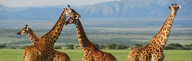 Types of Giraffes